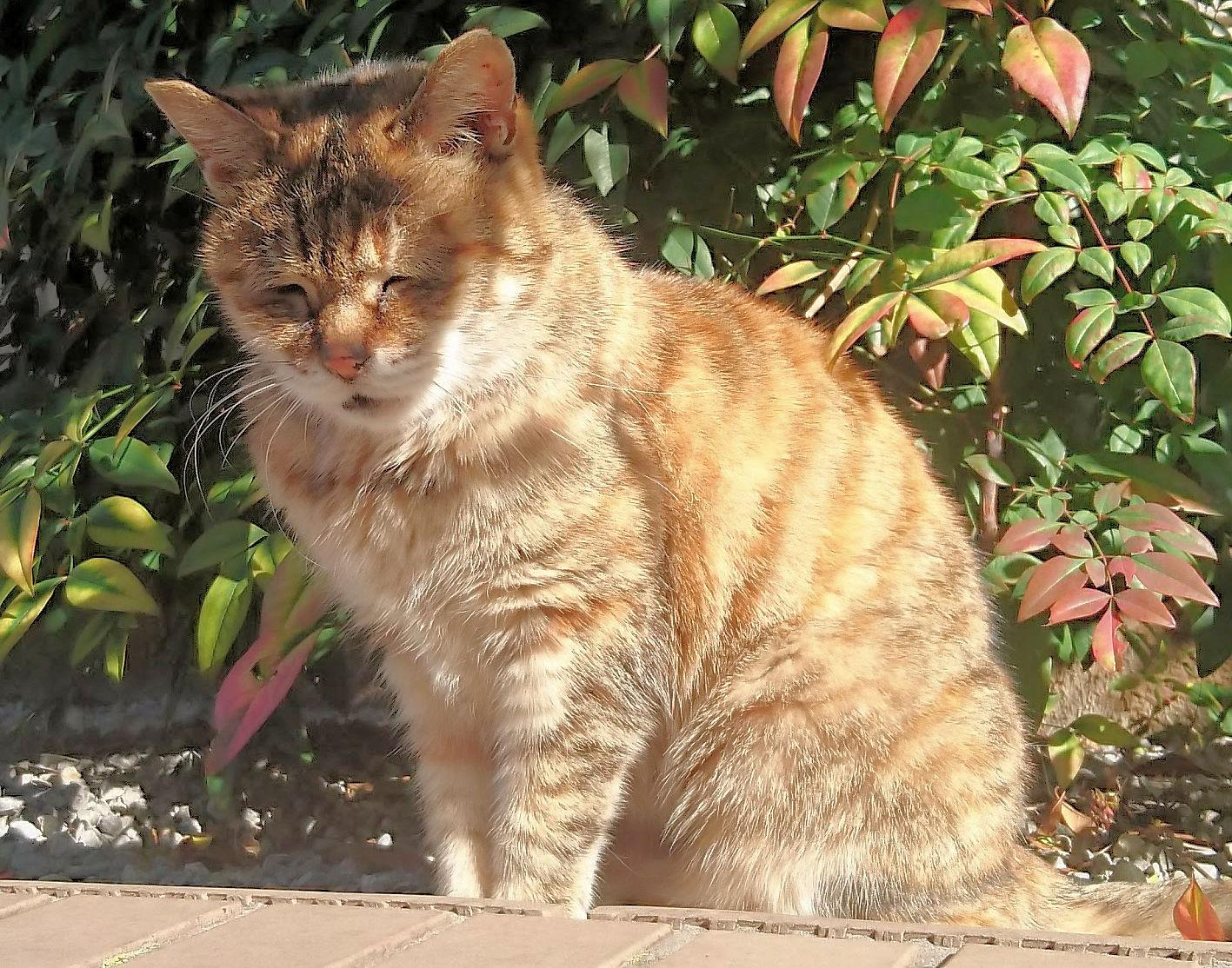 シニア猫.jpg