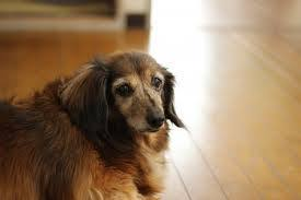犬3.jpeg