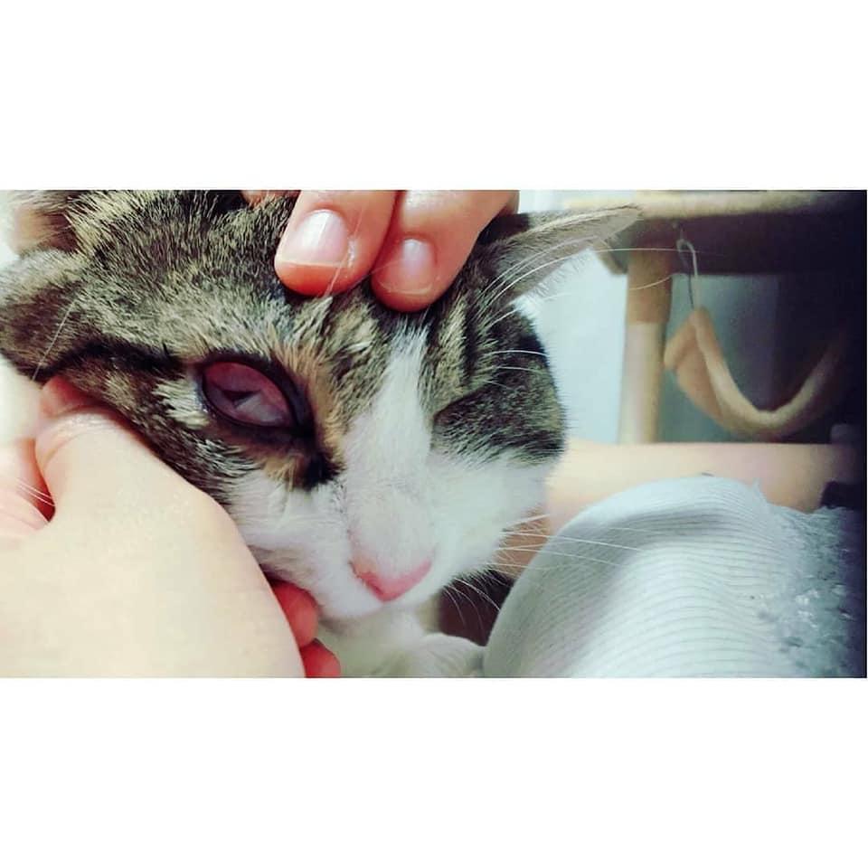 猫の結膜浮腫3.jpg