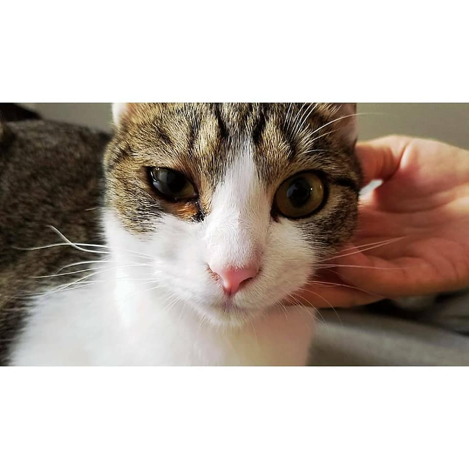 猫の結膜浮腫4.jpg