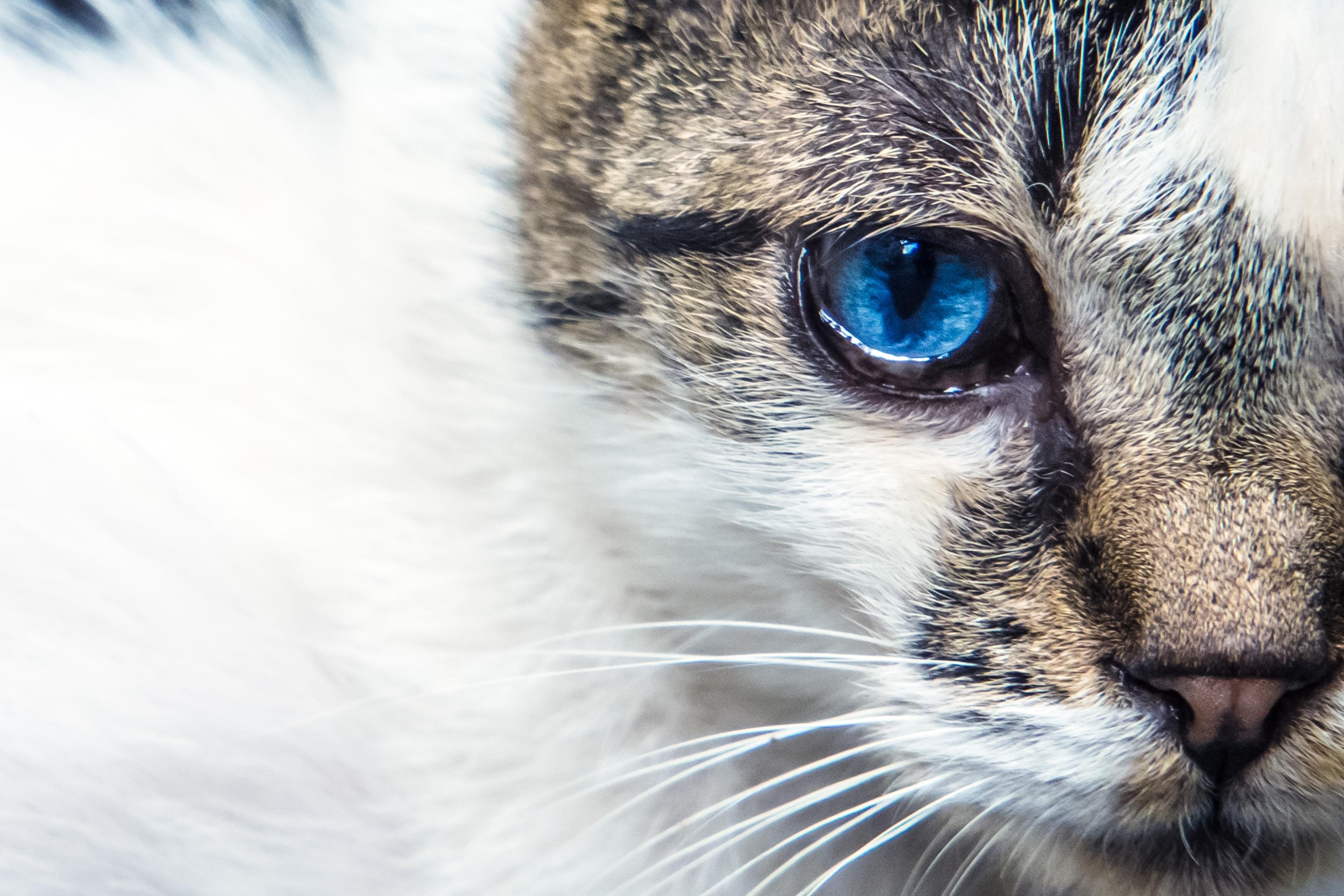 高齢猫(フリー).jpg