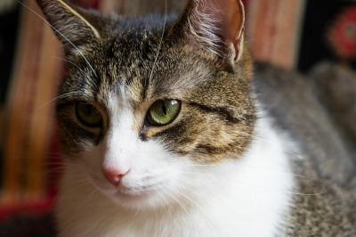 cat-3395726_640.jpg