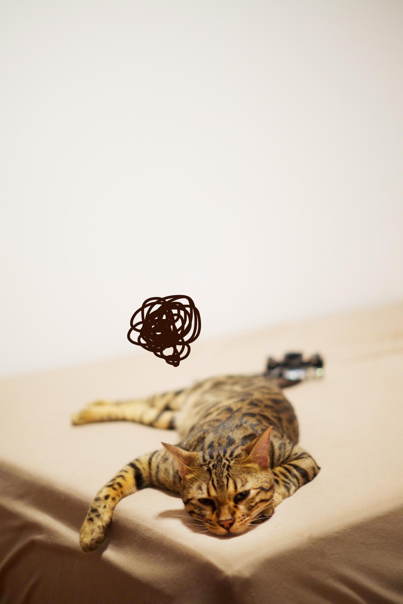 猫 しんどい.jpg