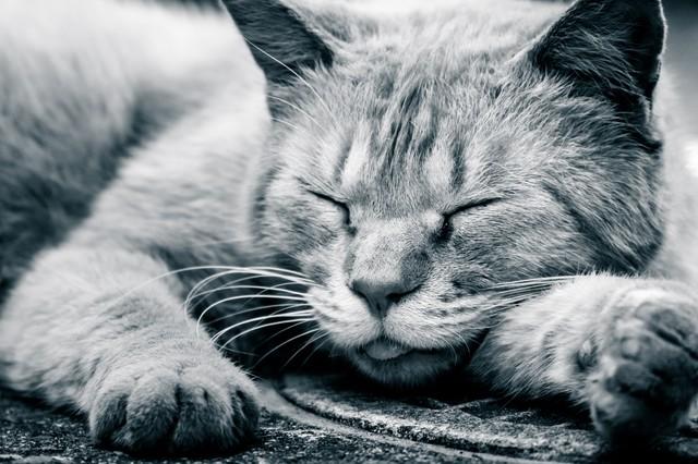 猫1.jpg