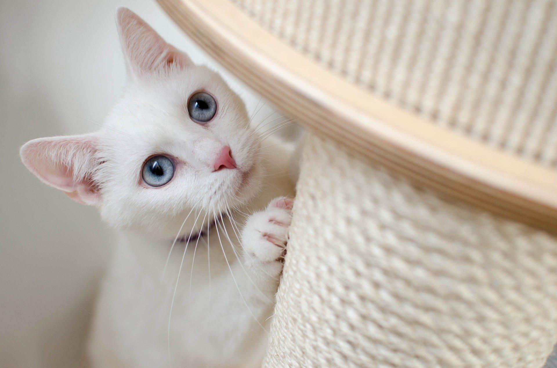 隠れる猫.jpg
