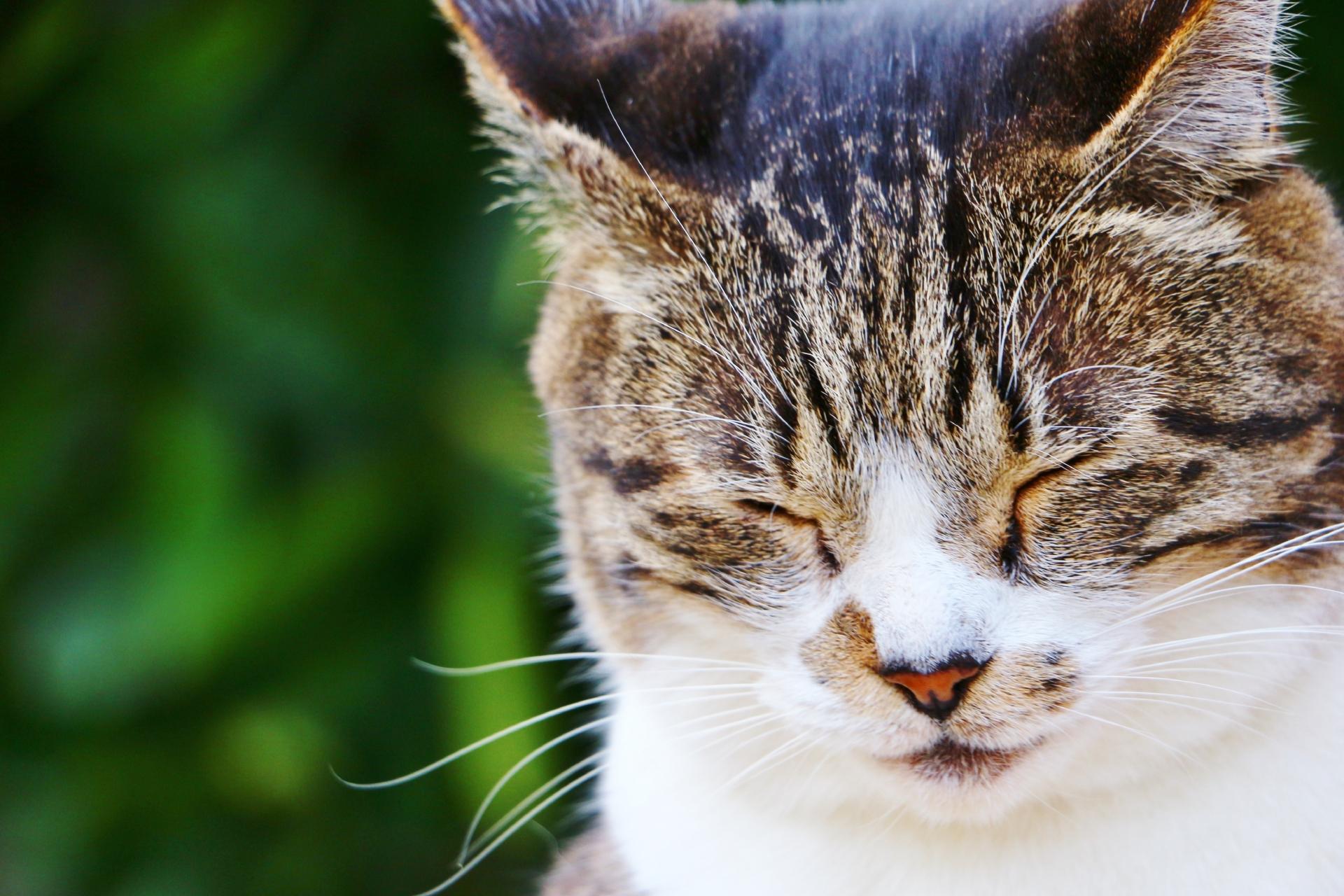 頷く猫.jpg