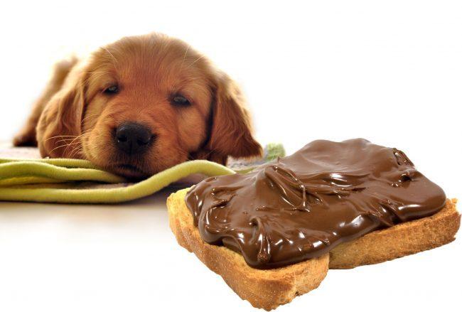 dog_vs_chocoloate-e1474897359384.jpg